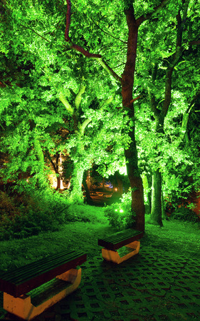 Illuminated in green trees in the night park