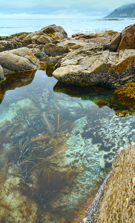 alga: Pool with alga in middle of stones ( Ramberg, Norway, Lofoten).
