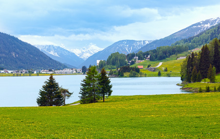 dandelion snow: Summer country landscape with Davos Lake and dandelion meadow (Switzerland).