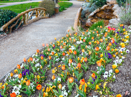 flamy: Beautiful orange tulips and Viola tricolor flowers in the spring park.