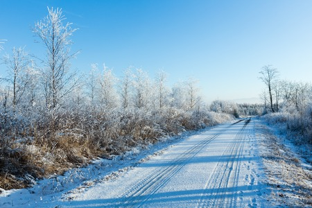 country roads: Winter  country road with snowy trees, Poland.