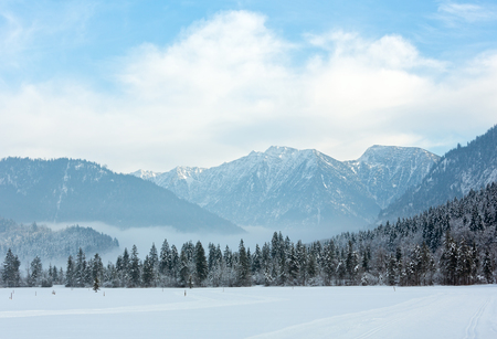 ski track: Cross country ski track and winter mountain landscape with snowy fir forest.