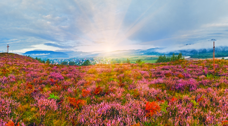 foothills: September sunrise country foothills panorama with heather flowers, wooden cross and sunshine (Lviv Oblast, Ukraine) Stock Photo