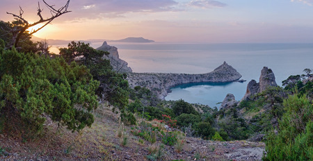 rocky mountain juniper: Daybreak coastline landscape of Novyj Svit reserve (Crimea, Ukraine)