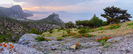 rocky mountain juniper: Morning sea landscape with rocks and coastline of Novyj Svit reserve (Crimea, Ukraine)