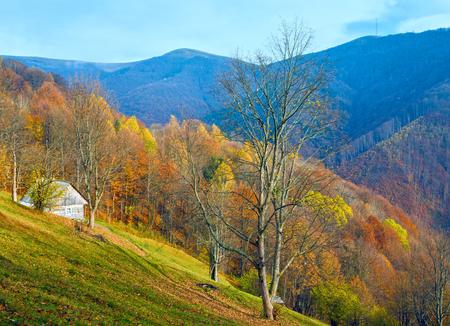 Carpathian Mountains (Ukraine) autumn landscape with cattle-breeding farm