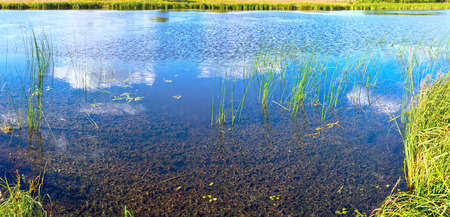 rushy: Summer rushy lake panorama view with clouds reflections.