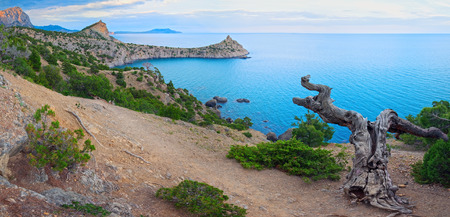 rocky mountain juniper: Summer rocky coastline of Novyj Svit reserve (Crimea, Ukraine, Capchik Cape).