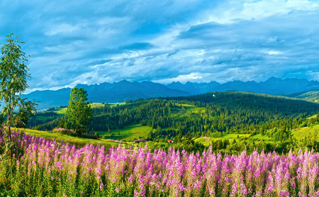 Summer evening mountain village outskirts with pink flowers in front and Tatra range behind (Gliczarow Gorny, Poland) Stock fotó