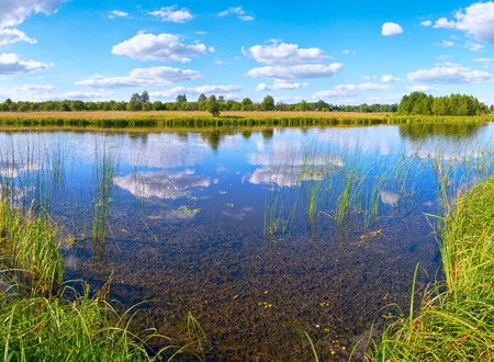 rushy: Summer rushy lake view with clouds reflections.