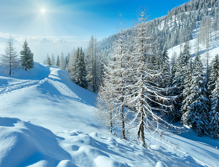 scenic  landscape: Morning winter misty mountain landscape with fir forest .