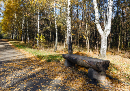 footway: Bench from logs of wood along footway in golden autumn city park.