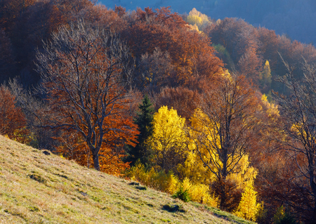 slope: Colorful forest on slope  in autumn mountain.
