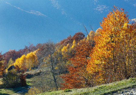 slope: Autumn misty mountain slope with colorful trees. Stock Photo