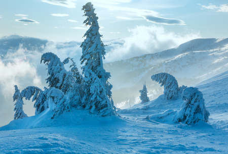 inclined: Inclined icy snowy fir trees on winter morning hill in cloudy misty weather. Stock Photo