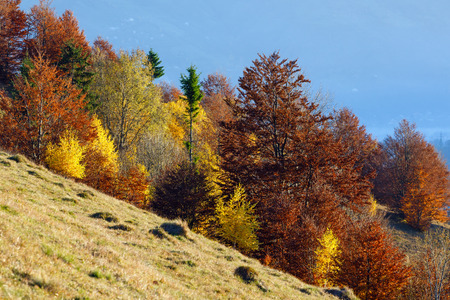 Colorful forest on slope  in autumn mountain.