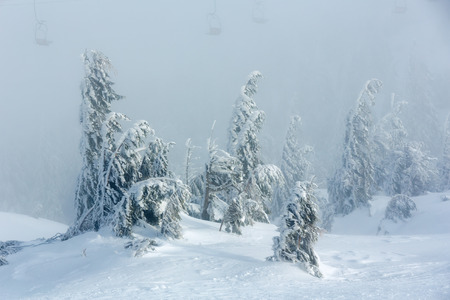 inclined: Inclined icy snowy fir trees on winter morning hill and chairs of ski lift in fog.
