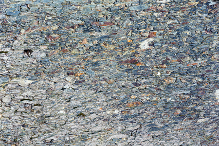 stratified: Stony background macro with interesting abstract tracery.