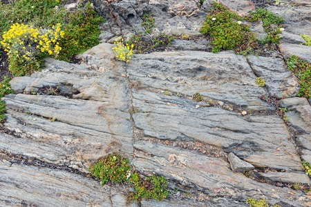 stratified: Part of rock close up with yellow flowers. Nature background.