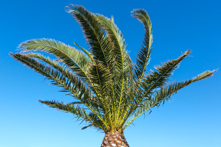 Branches of palm tree on summer blue sky background. Stock Photo