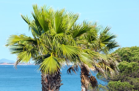 Palm tree on ocean shore on sky and water background.