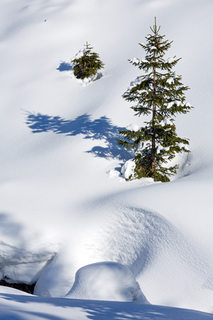snowdrifts: Winter snowy mountain hill with snowdrifts and small fir trees.