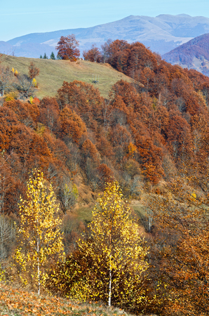 Colorful trees on slope and autumn misty mountain behind.