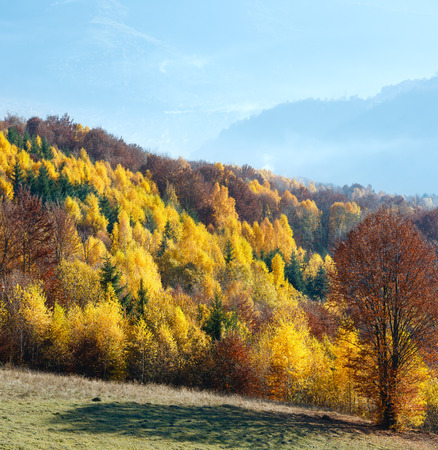 Autumn misty mountain view with yellow foliage of birch trees on slope.