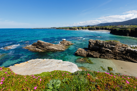 islas: Summer blossoming Atlantic coastline landscape with pink flowers and three beaches Islas, Xuncos and Castros (Spain).