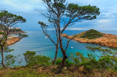 Sea bay summer view with conifer trees in front. Costa Brava, Catalonia, Spain. Stock Photo
