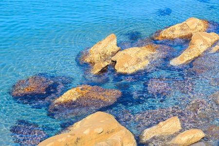seaweeds: Stones with seaweeds in clear sea water nier shore. Stock Photo