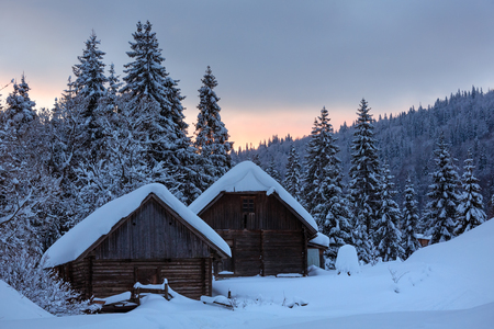 Wooden sheds and fir forest behind on winter slope in evening Ukrainian Carpathian Mountains.