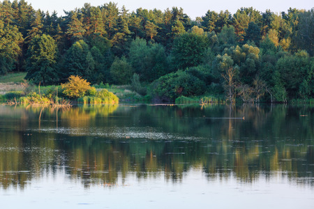 Evening summer lake landscape with plants reflections on water surface (near Shklo settlement, Lviv Oblast, Ukraine) .