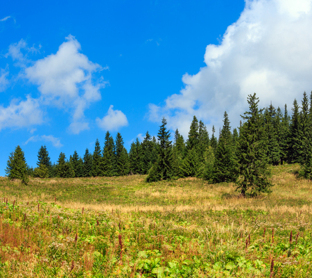 Beautiful summer mountain slope with sky and cumulus clouds, and fir forest (Carpathians, Ukraine). Two shots stitch image.
