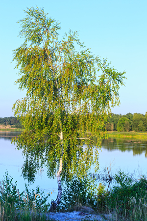Evening summer lake landscape with reflections on water surface and birch tree. Stock Photo