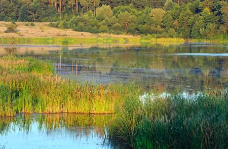 Evening summer lake landscape with plants reflections on water surface (near Shklo settlement, Lviv Oblast, Ukraine) .