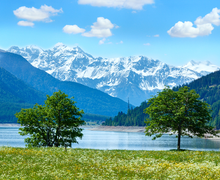 dandelion snow: Reschensee ( or Lake Reschen) summer landscape with  blossoming meadow and blue cloudy sky (Italy)