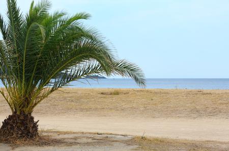 Summer sea coast landscape with palm on beach (Tristinika, Halkidiki, Sithonia, Greece). Stock Photo