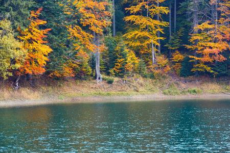 National Nature Park Synevyr autumn landscape. Is largest lake in the Carpathian Mountains of Ukraine (Mizhhiria, Zakarpattia Oblast). Stock Photo