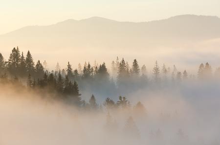 カルパティア山脈の斜面の朝の霧 (イヴァーノ = フランキーウシク島, ウクライナ).Chornohora に表示されます。