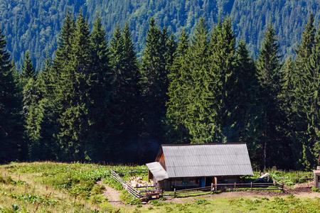 Farmhouse shed on summer mountain Vesnjarka plateau (Carpathian, Ukraine). Stock Photo