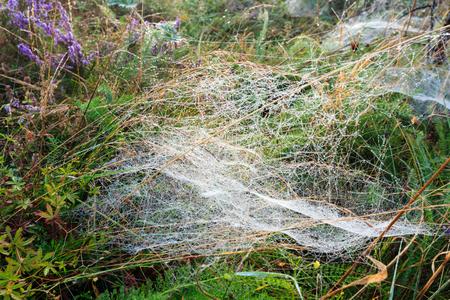 De vroege nevelige dauw van de ochtend daalt op wilde berg grasrijke weide met wilde lilac heidebloemen en spinneweb.
