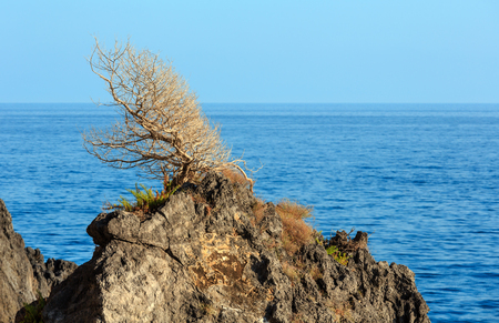 Beautiful Tyrrhenian sea coastline landscape and lonely withered tree on rock top.  Cilento and Vallo di Diano National Park, Salerno, Italy