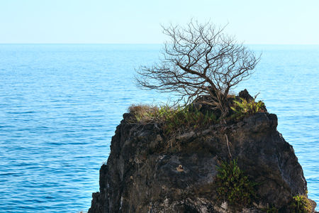 Beautiful Tyrrhenian sea coastline landscape and lonely withered tree on rock top. Cilento and Vallo di Diano National Park, Salerno, Italy Banque d'images