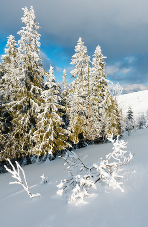 Winter calm mountain landscape with beautiful frosting trees and snowdrifts on slope (Carpathian Mountains, Ukraine). Skiers are unrecognizable.