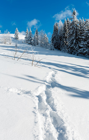 Winter calm mountain landscape with beautiful frosting trees and footpath track through snowdrifts on mountain slope (Carpathian Mountains, Ukraine)