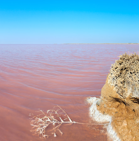 Water surface of pink extremely salty Syvash Lake, colored by microalgae. And small dead plant covered with crystalline salt. Stock Photo