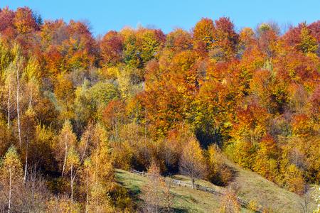 Autumn Carpathian Mountains landscape with multicolored trees on slope (Rakhiv district, Transcarpathia, Ukraine).