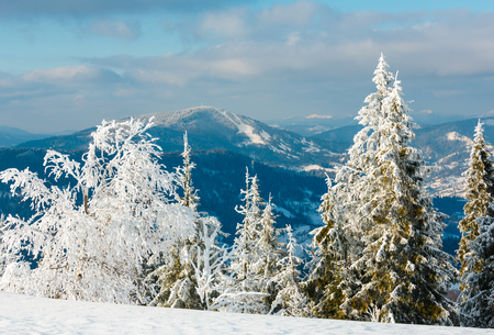 Morning winter calm mountain landscape with beautiful frosting trees and snowdrifts on slope (Carpathian Mountains, Ukraine, Trostian mount in far).