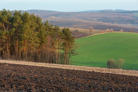 Paisaje rural de la mañana de primavera con campos agrícolas arados en colinas, árboles y arboledas en los valles. Tierras de cultivo cultivables y de crecimiento a la tierna y delicada luz del amanecer.